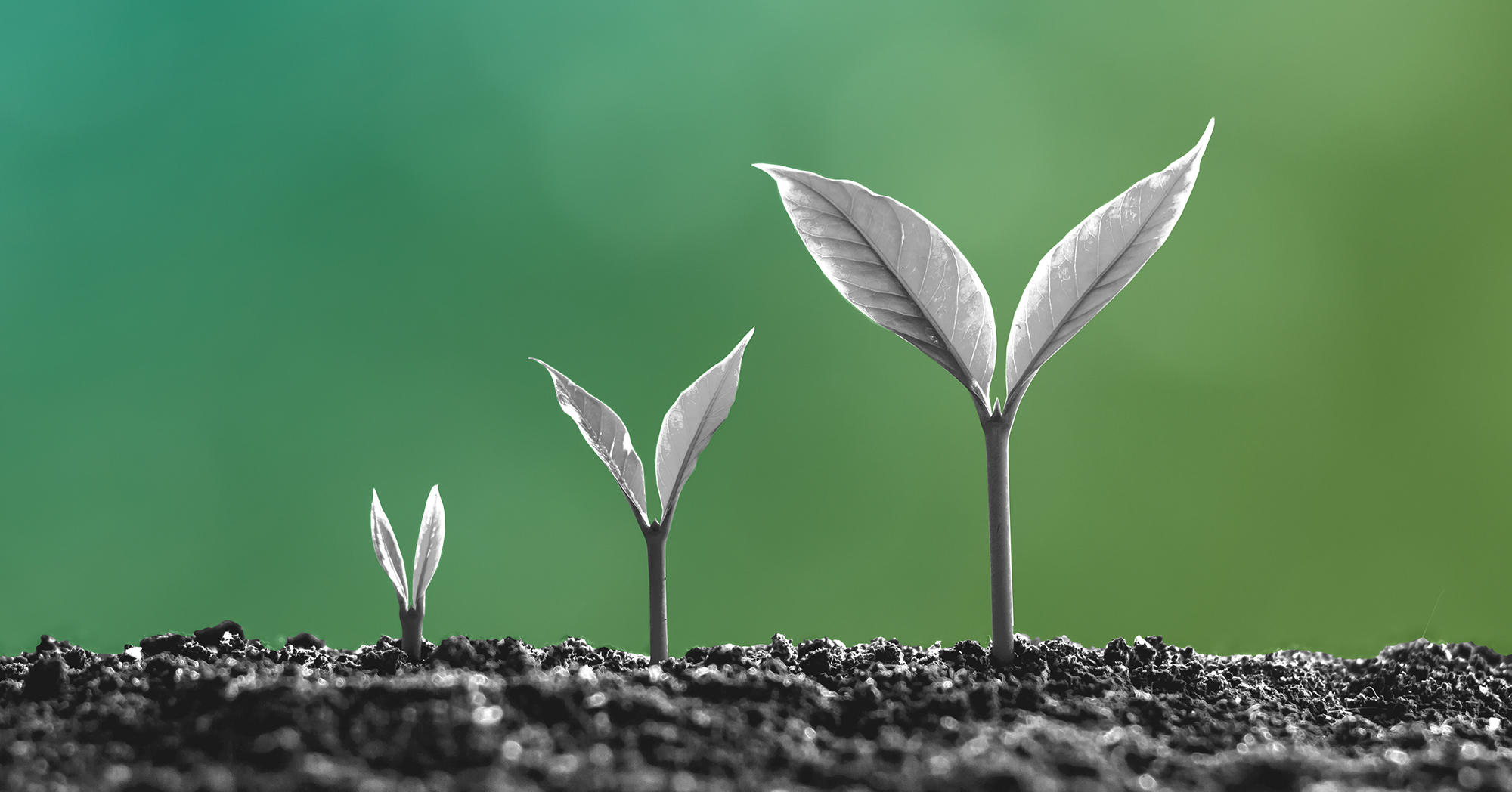 """""""Seed is the New A – But What's Next?"""""""